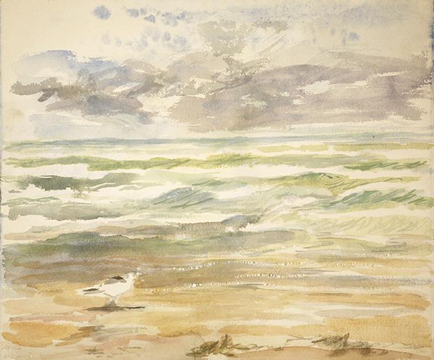 gull surf Camber Sands seaside