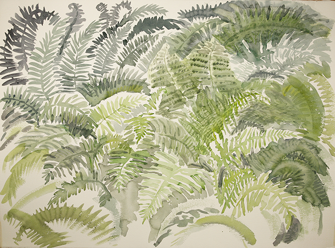 Bethel Maine ferns