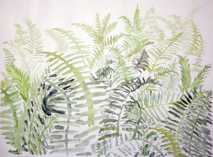 watercolor watercolour painting USA ferns western maine