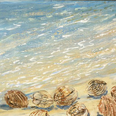 sea shells oi painting